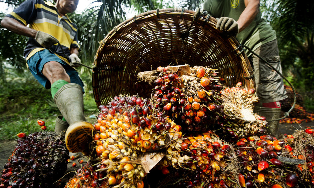 Palm Oil - WWF_International