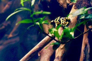 Flightnook - Biodiversity