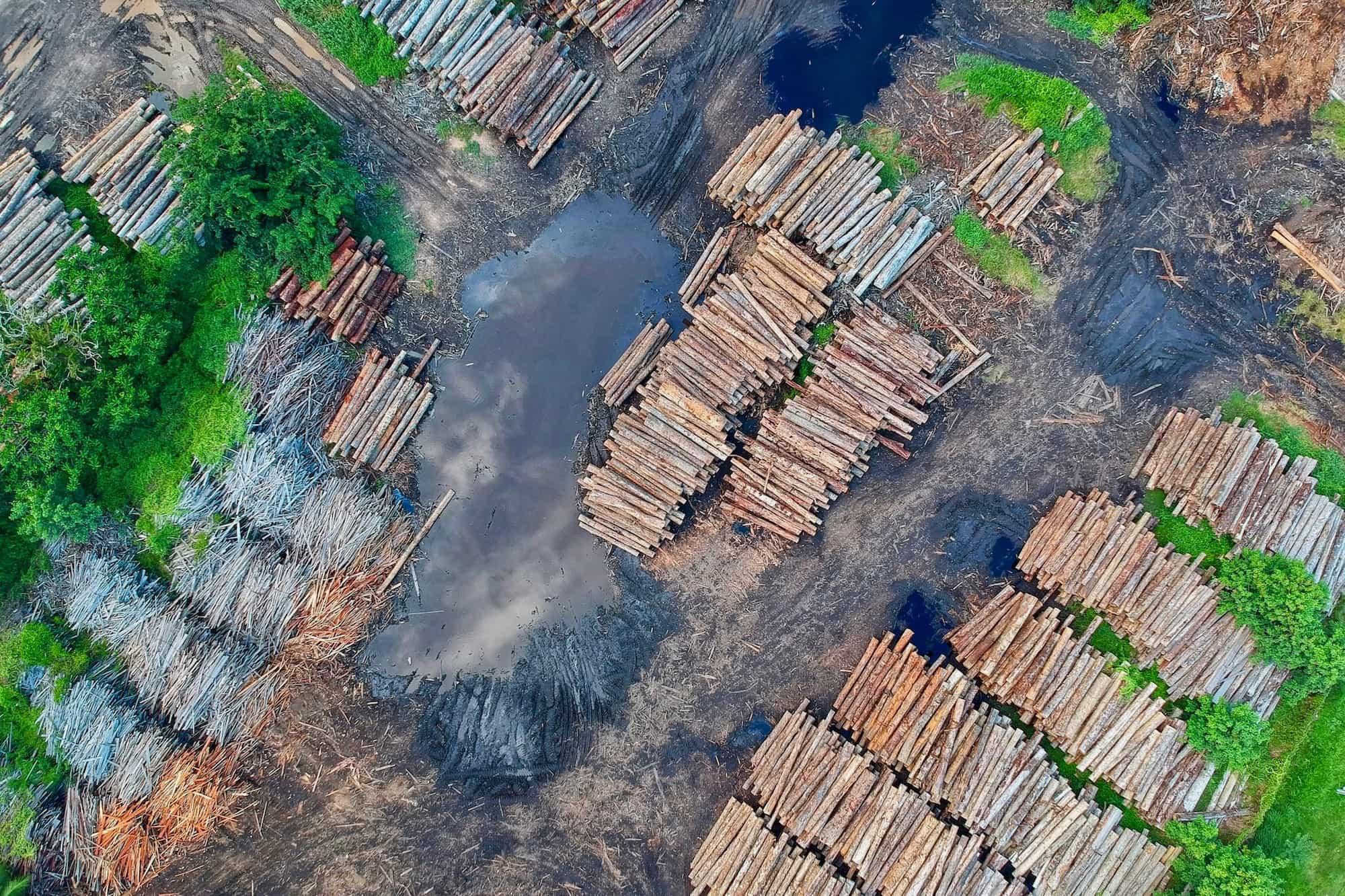 Flightnook - Deforestation_V2