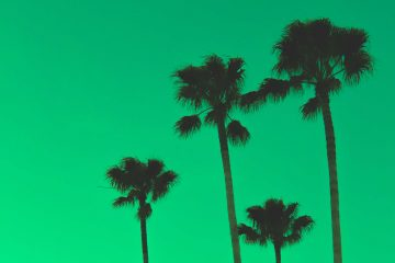 Flightnook - Palm tree